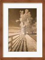Fence, Shadows, & Trees, Kentucky 08 Fine-Art Print