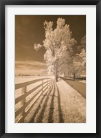 Fence, Shadows, & Trees, Kentucky 08 Fine-Art Print