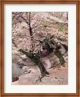 Cherry Blossom Lane Fine-Art Print