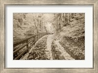 Fence & Pathway, Munising, Michigan 12 Fine-Art Print