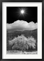 Cottonwood & Sunbeams, Canyon de Chelly, Arizona 10 Fine-Art Print