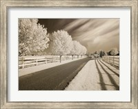 Trees & Shadows, Shipshewana, Indiana 11 Fine-Art Print