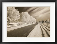 Trees & Shadows, Shipshewana, Indiana 11 Fine-Art Print