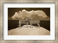 Two Zebras, Port Austin, MI 11 Fine-Art Print