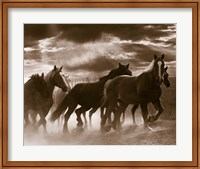 Running Horses And Sunbeams, Rothbury, Michigan Fine-Art Print