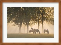Horses in the mist Fine-Art Print