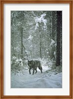 Winter Encounter - Wolf Fine-Art Print