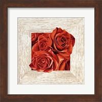 French Roses I Fine-Art Print