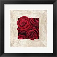 French Roses II Fine-Art Print