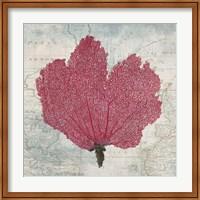 Fan Coral Fine-Art Print