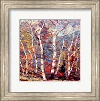 Birch Colors 2 Fine-Art Print