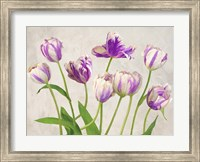 Tulipes Fine-Art Print