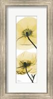 Iceland Poppy Yellow Fine-Art Print