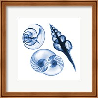 Blue Shells Two Fine-Art Print