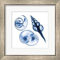 Blue Shells Two Fine-Art Print