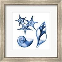 Blue Shells Three Fine-Art Print