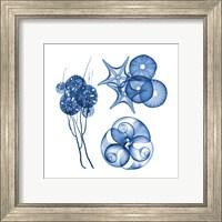 Blue Shells Four Fine-Art Print