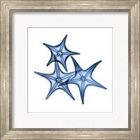Blue Three Starfish Fine-Art Print