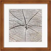 Tree Rings Fine-Art Print
