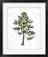 Into the Woods Trees I Fine-Art Print