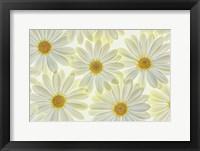 Daisy Flowers Fine-Art Print