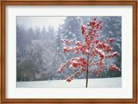 Alone in the Snow Fine-Art Print