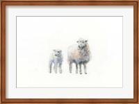 Sheep and Lamb Fine-Art Print