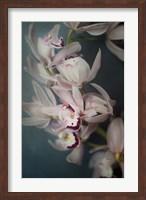 Dark Orchid I Fine-Art Print