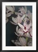 Dark Orchid II Fine-Art Print