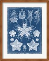 Marine Blueprint III Fine-Art Print