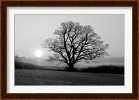 Meadow Tree Fine-Art Print
