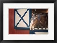 Patriotic Pony I Fine-Art Print