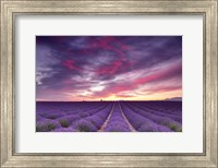 Pink and Purple Fine-Art Print
