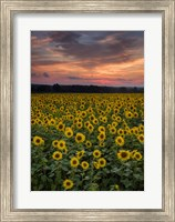 Sunflowers to the Sky Fine-Art Print