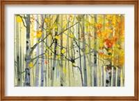 Autumn Birches Fine-Art Print