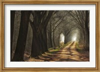 Paths Fine-Art Print