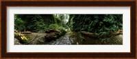 Fern Canyon, Redwood National Park Fine-Art Print