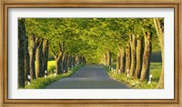 Lime Tree Alley, Mecklenburg Lake District, Germany Fine-Art Print