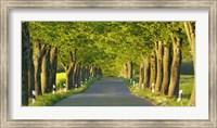 Lime Tree Alley, Mecklenburg Lake District, Germany Fine-Art Print