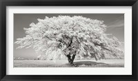 Lime Tree with Frost, Bavaria, Germany Fine-Art Print