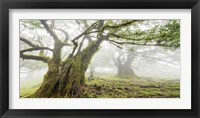 Laurel Forest in Fog, Madeira, Portugal Fine-Art Print