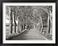 Lime Tree Alley, Mecklenburg Lake District, Germany 2 Fine-Art Print