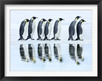 Emperor Penguin Group, Antarctica Fine-Art Print