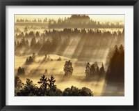 Fog Impression At Sindelbachfilz, Bavaria, Germany Fine-Art Print