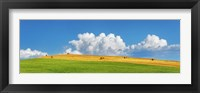 Corn Field Harvested, Tuscany, Italy Fine-Art Print