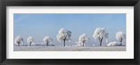 Alley Tree With Frost, Bavaria, Germany Fine-Art Print