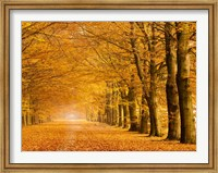 Woods in Autumn Fine-Art Print