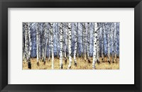 Birch Grove in Autumn Fine-Art Print