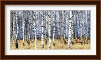 Birch Grove in Autumn Fine-Art Print