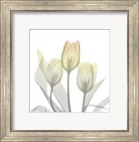 Sunday Morning Tulips Two Fine-Art Print